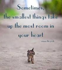 animal rescue quotes and sayings. Brilliant And Read More  Tags Animal Rescue On Animal Rescue Quotes And Sayings E