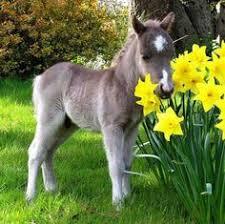 baby mini horse. Plain Horse Baby Mini Horse For Mini Horse