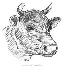 Disegno Muccatoro37 Animali Da Colorare