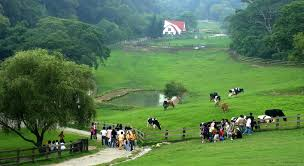 <b>Flying Cow</b> Ranch Inn (Miaoli) - Deals, Photos & Reviews
