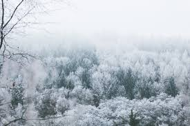 <b>Winter Landscape</b> Pictures [Stunning!]   Download Free Images on ...