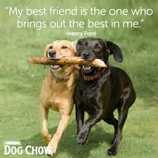 Quotes About Dogs And Friendship Unique Quotes About Dog Friendship Brilliant Best 48 Dog Best Friend Quotes