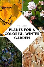 home winter plants the best plants for a colorful winter garden home advice gardens gardening planting