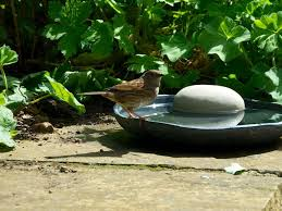 Drinkies. Pebble bird bath by Crocus