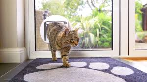 microchip cat flap glass into house