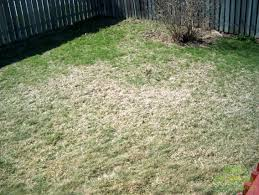 White Grubs And Your Lawn Destroy Or Be Destroyed Lawnsavers