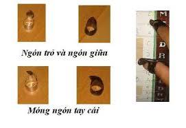 """Résultat de recherche d'images pour """"""""đàn tranh việt nam"""""""""""