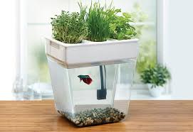 Self-Sustaining Future Kitchen With Fish And Plants ...