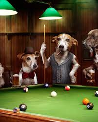 real dogs playing pool