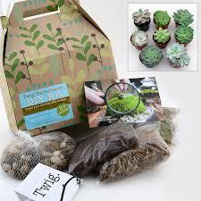 do it yourself succulent terrarium kit with 5 plants