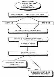 Реферат Воля Волевые качества и их развитие com  Волевые качества человека и их развитие
