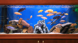 fish tank for office. Office Fish Tank For