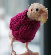 featherless parrot.  Featherless How Could You Tell Us About A Bird Wearing Sweater And Not Give  In Featherless Parrot