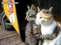Restraining Cat meme collection | #1 Mesmerizing Universe Trend via Relatably.com