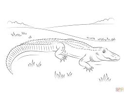 S Lection De Coloriage Alligator Imprimer Sur Laguerche Com Page 5