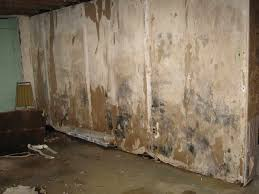 improvement how to remove mold in basement removing mold from basement walls r28