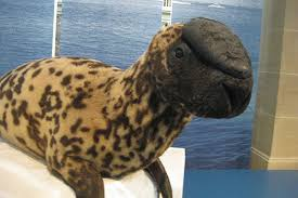 beautiful animals on the verge of extinction two are from hooded seals
