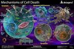 Images & Illustrations of cell death