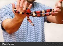 мальчик змеями мужчина держит руках рептилий поперечнополосатая