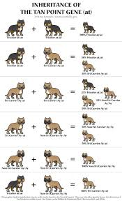 French Bulldog Color Chart Frenchy News Pudgy Bulls