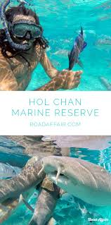 best marine reserves ideas marine life what is  photo essay snorkeling hol chan marine reserve