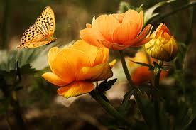 jolie fleur jaune et papillon | images gratuites et libres de droits