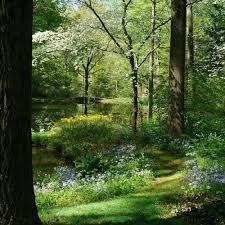 Small Picture Rick Darkes American Woodland Garden Gallery Garden Design