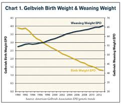 Cattle Birth Weight Chart Maternal Efficiency Of Gelbvieh And Balancer Females By