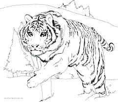 Baby Snow Leopard Coloring Pages At Getdrawingscom Free For