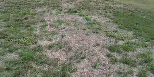 Lawn Pest Identification Yard Insect Control