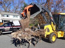 schedule a consultation with one of our stump removal specialists at raritan valley tree service in east brunswick nj by calling 732 422 0351