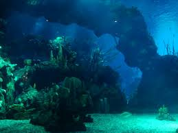 underwater restaurant disney world. The 5.7 Million Gallon Aquarium Is Second Largest In North America (next To Atlanta). It So Big That Spaceship Earth Could Fit Inside Of With Underwater Restaurant Disney World
