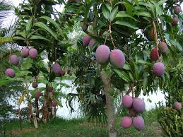 Heavenly Fruit Harvest In Iran  IWPRIranian Fruit Trees