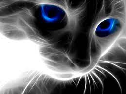 Free download 3D Cat Face Wallpapers ...