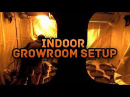 Basement Grow Room Design Impressive Setting Up Grow Tent Hand Watering Indoor Grow Room Setup Grow