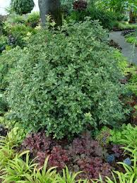 Small Picture Garden Design Garden Design with Evergreen Shrub Garden Design