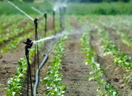 Resultado de imagem para  povo trabalhando area irrigada em margem de rio