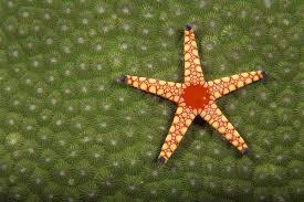 What Are Some Ways Starfish Adapt To Their Environment