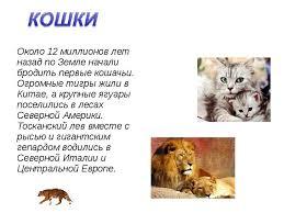 Животный мир черного моря реферат класс Происходит окрашивание кости в животный мир черного моря реферат 4 класс цвет грунта