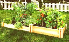 how to start a small garden. Small Vegetable Garden Layout Examples How To Start Kitchen A Raised Beds Full Size Of E