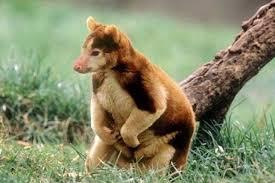 los 50 animales mas raros