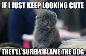 Funny Cat Meme Share This Funny Cat Meme On Facebook ... via Relatably.com