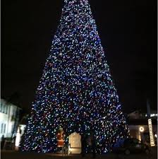 delray beach tree lighting. Delray Beach, Florida - 100 Ft Christmas Tree You Can Walk Threw Beach Lighting 1