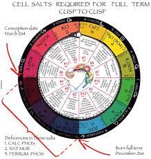 Cell Tissue Salts Universal Truth School