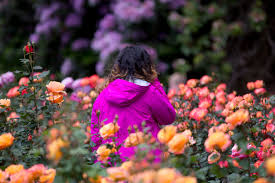 see the 4 public rose gardens of portland ready for peak bloom in june