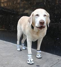 Dog Booties Pattern Simple Design Ideas
