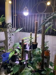 Đèn chiếu sáng cho cây nội... - Đèn Led Trồng Hoa Lan - Zako