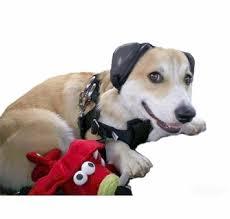 Mutt Muffs Ddr337 Dog Ear Muffs Black Safe And Sound