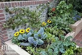 kitchen garden kitchen garden in wooden raised beds with greens and yellow flowers kitchen garden seeds