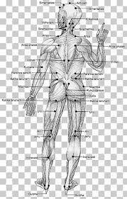 Acupuncture Meridian Chart Free Download 112 Pressure Point Png Cliparts For Free Download Uihere
